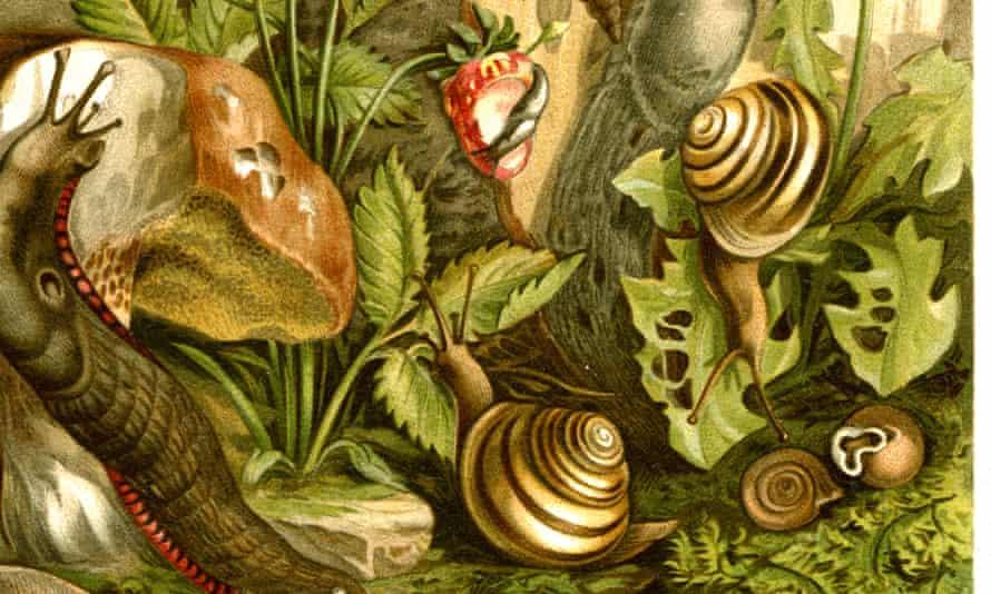An artistic illustration of snails