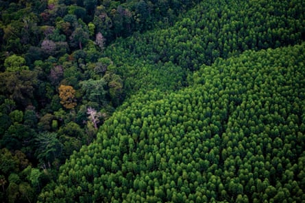A eucalyptus pulpwood plantation next to natural forest to the east of Pekanbaru, Sumatra.
