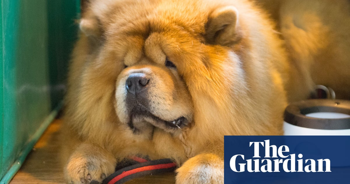 Toy Dog Day At Crufts But Its Not Fur Everyone Life And Style