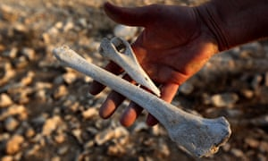 Paul Daley holds human bones found the trenches on the heights of Beersheba