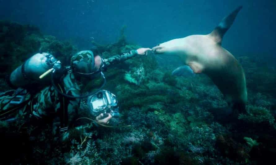 Valerie Taylor and an Australian sea lion underwater.