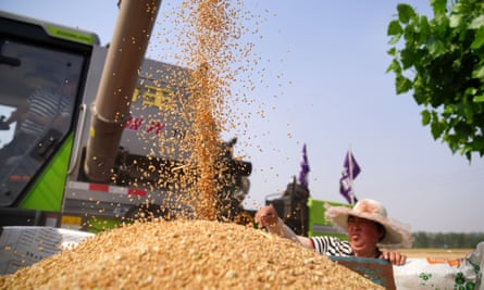A farmer harvests wheat in Hebei province, China