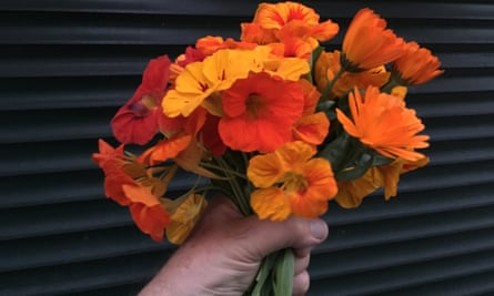 A hand holding a bunch of nasturtiums