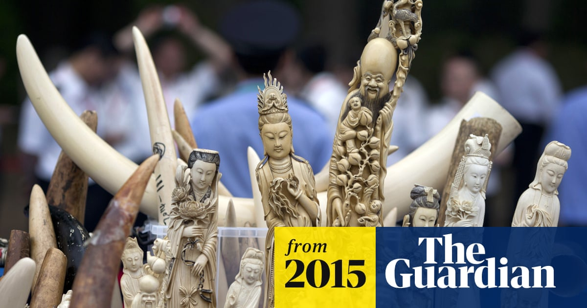 3bd41a27c958 Japan s inaction fuelling illegal ivory trade as demand rises