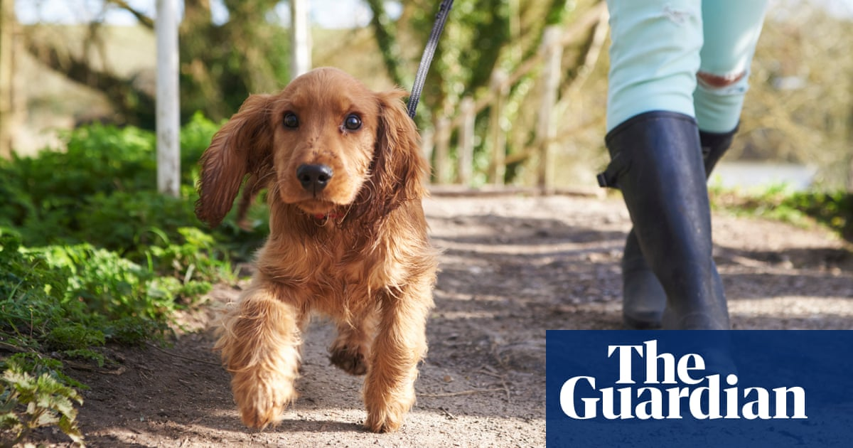 Number of dog owners thinking about giving up pet surges, charity reports | the Guardian