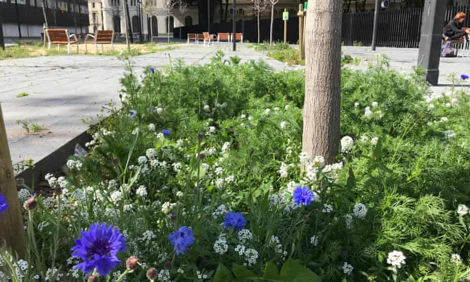 Alcorques Vivos is a pilot scheme that plants insect-attracting wildflowers at the base of trees instead of surrounding them with pavement or grating.