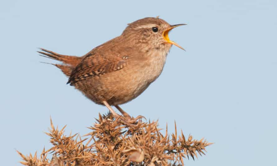 A wren adds to the chorus.
