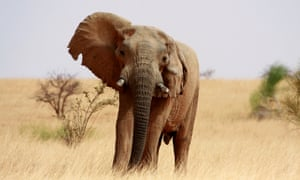 Ongoing conflict in Mali is impacting both humans and the wildlife population, with elephant numbers falling.