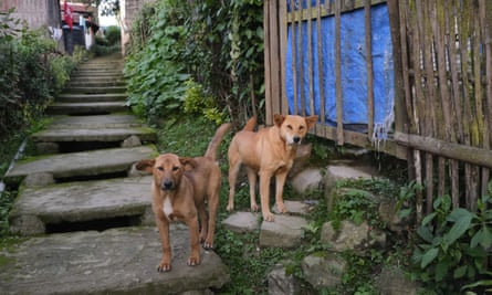 Dogs near their owners' home in Kohima, the capital of Nagaland.