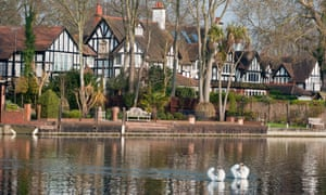 Swans on on the river Thames in Maidenhead, Theresa May's own constituency in the home counties.