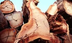 Illegal logging seized in Brazil.