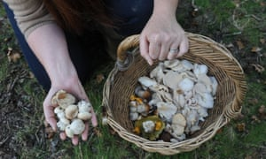 'Everything that can be eaten is being picked,' said Sara Cadbury, a member of the Hampshire Fungus Recording Group.