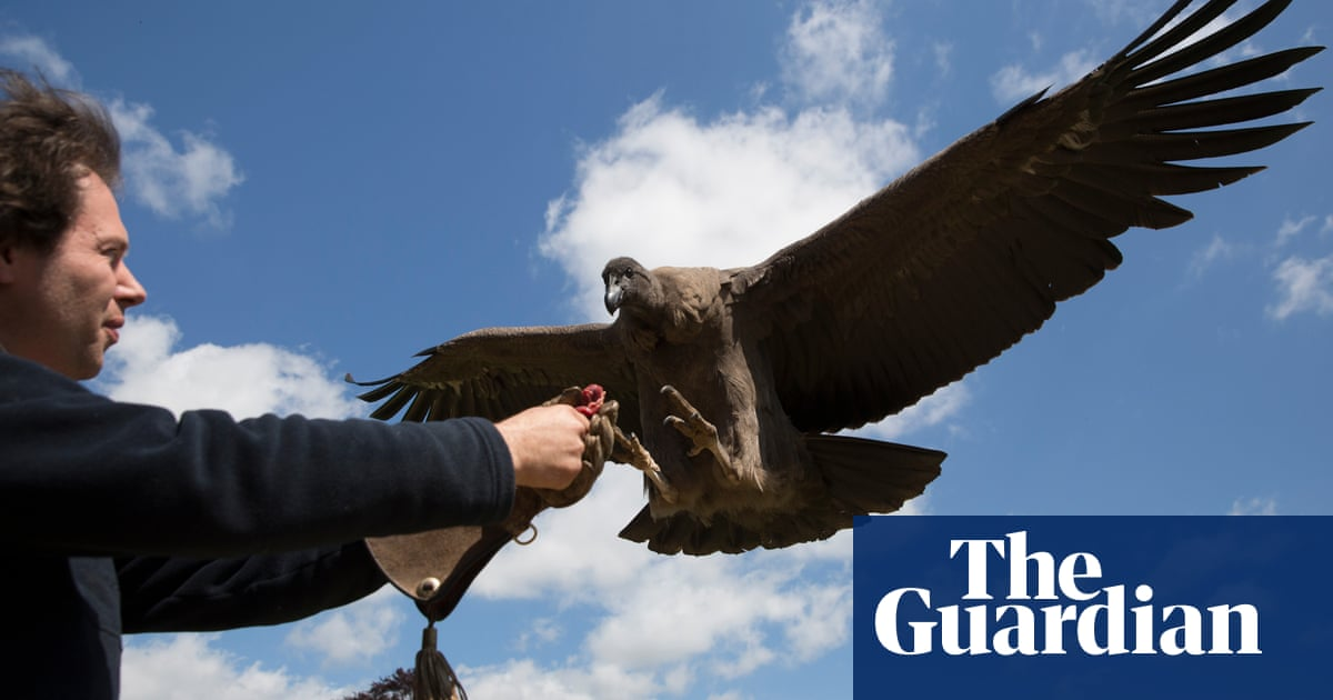 The World S Oldest Centre For Birds Of Prey In Pictures Art And Design The Guardian