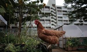 Oasis Farm An urban farm in Waterloo