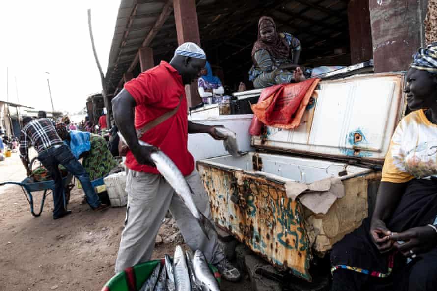 Fish seller Farba Fatty uses a freezer at Tanji fish market.