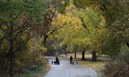 Sherwood Park ravine in Toronto