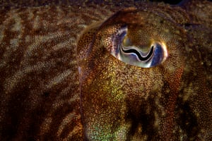 Close to nature winner (2013):  Cuttlefish Eye by Michael Gallagher, Swanage Pier, Dorset