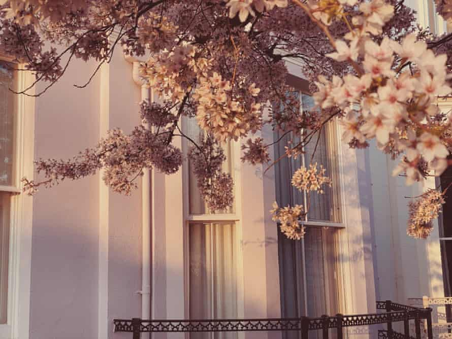Blossom on a branch in front of a white-painted bay window in pale sunlight.