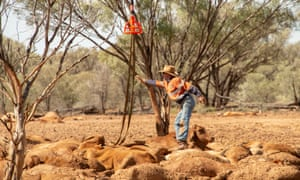 An estimated half a million cattle died in the north Queensland, according to the PM. He said the government's new recovery package for cattle farmers will help graziers rebuild 'station by station, farm by farm'.