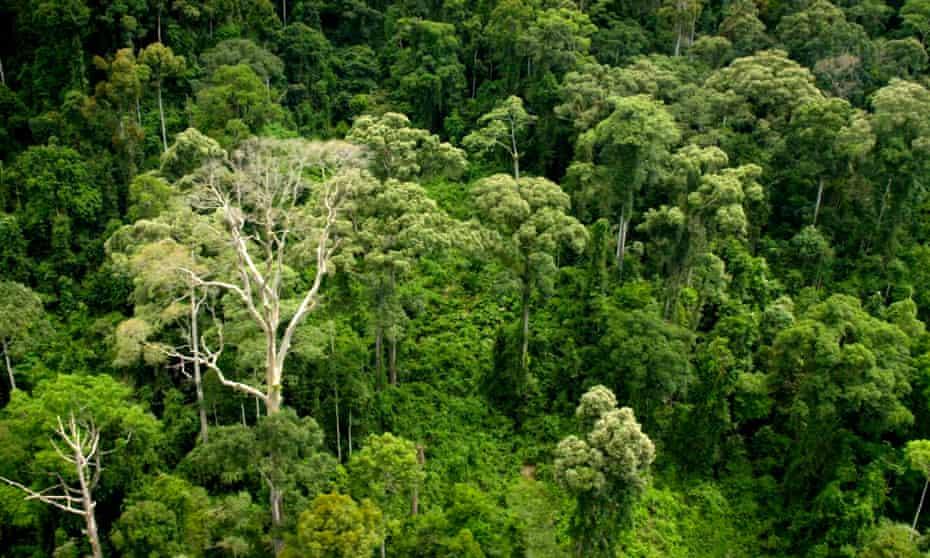 Aerial shot of Borneo rainforest