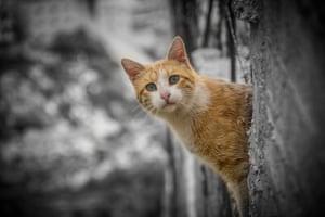 A cat at Aida camp
