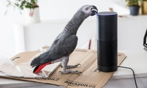 buddy the parrot mimicked its owners voice and ordered a consignment of gift boxes using an amazon echo