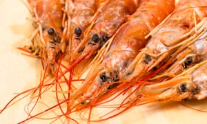 Group of fresh red langoustines