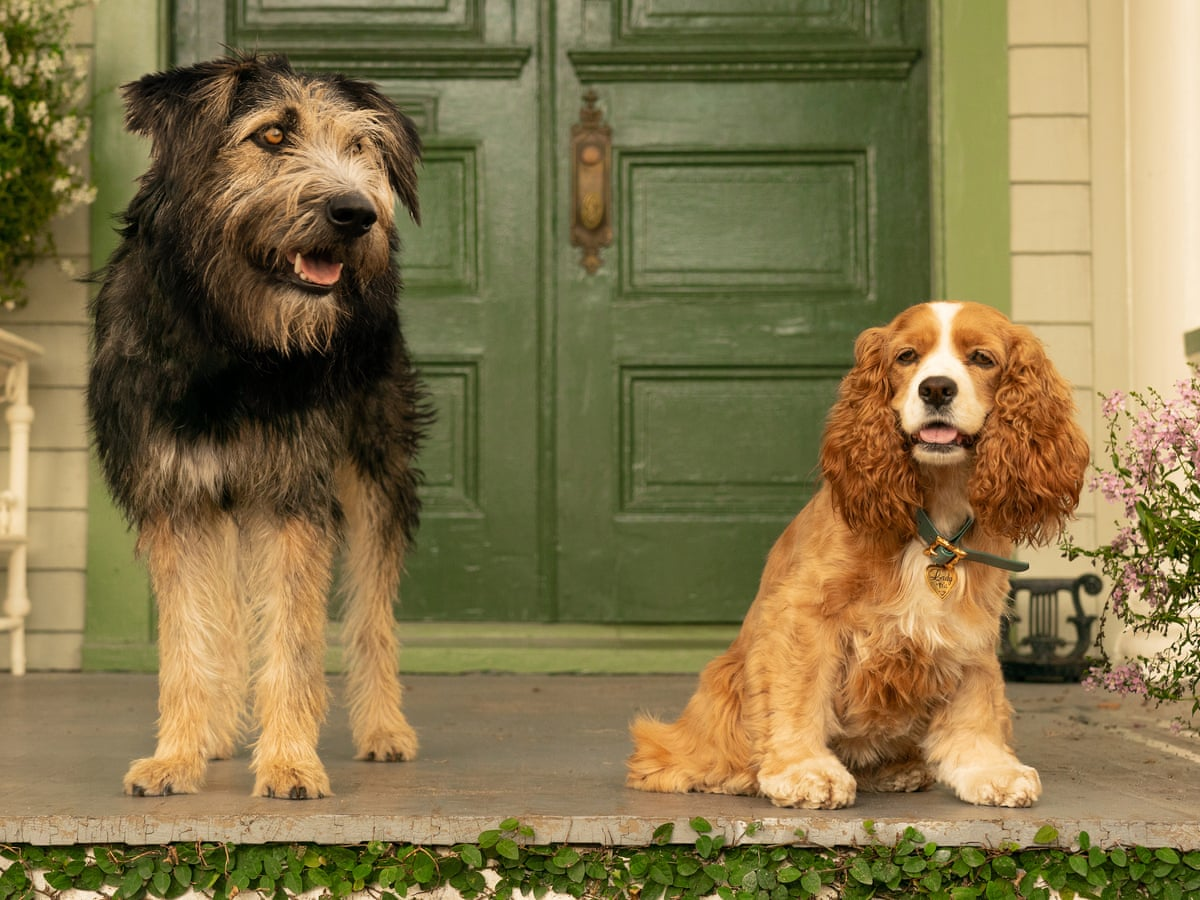 Lady And The Tramp Review Disney S Lovestruck Dogs Come To Half Life Walt Disney Company The Guardian