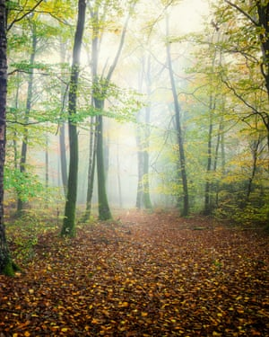 broceliande forestmood in the forest in autumn