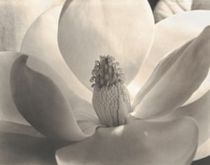 Magnolia Blossom, 1925Born in Portland, Oregon, Imogen Cunningham worked with Edward S Curtis before opening her own studio, and was acclaimed for her portraits, botanical shots and nudes
