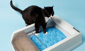Toby tentatively steps into the self-cleaning litter box