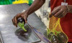 Aubergines in netting