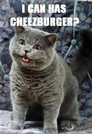 'I can has cheezburger?' – the original Lolcat.