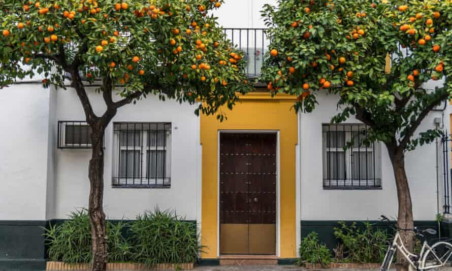 A house in the Santa Cruz neighborhood, with orange trees outside.