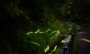 This long exposure picture taken on 16 June 2020 shows fireflies at Tatsuno Hotarudoyo Park in Tatsuno in Nagano Prefecture.
