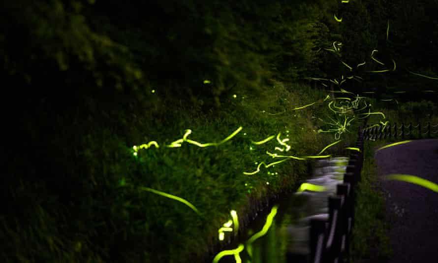 A long exposure photograph shows fireflies dancing at Tatsuno Hotarudoyo Park.