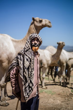 Trading post: Babille livestock market in Ethiopia. among the region's biggest and attracts traders from as far as Djibouti and Somaliland, including this Somali camel trader with his herd.