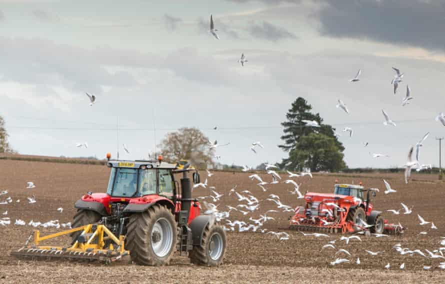 Tractors sow seeds treated with neonicotinoids.