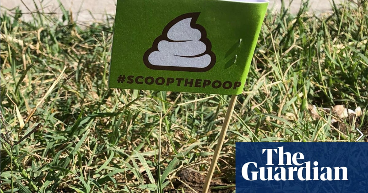 'A nudge to pick up the fudge': US city flags dog poo left in public places