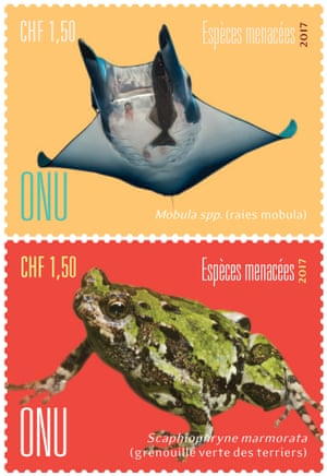 Devil rays and Green burrowing frog