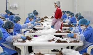 Workers sort anchovies at a fish factory in Durrës, Albania