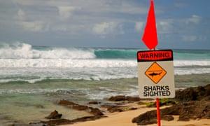 hawaii shark sighting sign