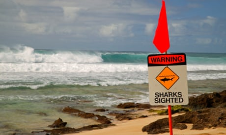 Swimmer dies after shark attack in Hawaii