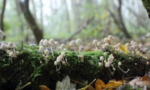 Mushrooms Growing On Dead Wood In A Forest In FallStocksy txp7ca84f7dAZ7200 Medium 794541