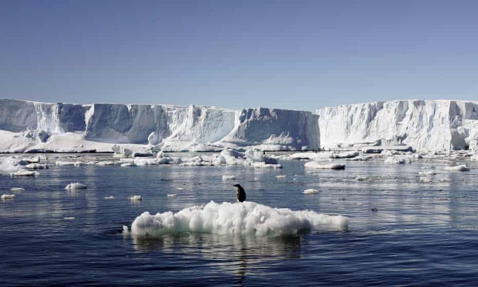 an adelie penguin in east antarctica