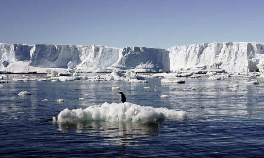 An Adelie penguin standing atop a block of melting ice in East Antarctica. Slowly-melting ice is a 'feedback' through which today's carbon pollution will heat the planet for centuries to come.