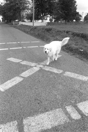 A Republican dog crosses the line.