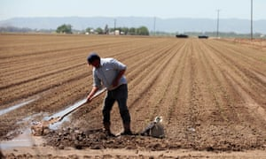 A farm worker, Armando Garcia, during spring planting in the Central Valley in Davis, California.