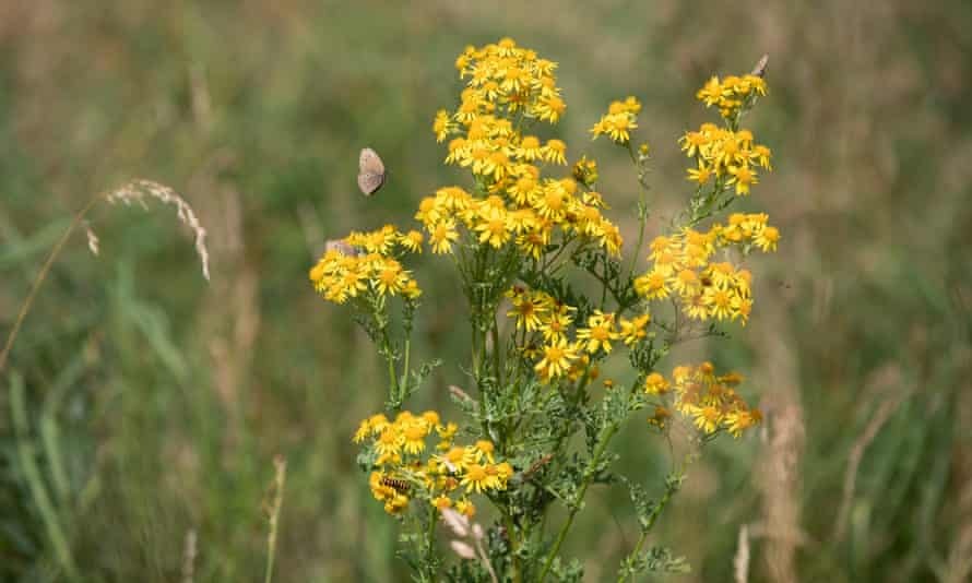 wild flowers, butterflies and insects
