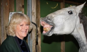 Duchess of Cornwall touring the stables backstage at Olympia. Horses were shown to react to images of angry faces by turning to look with their left eye. Their heart rate also increased.